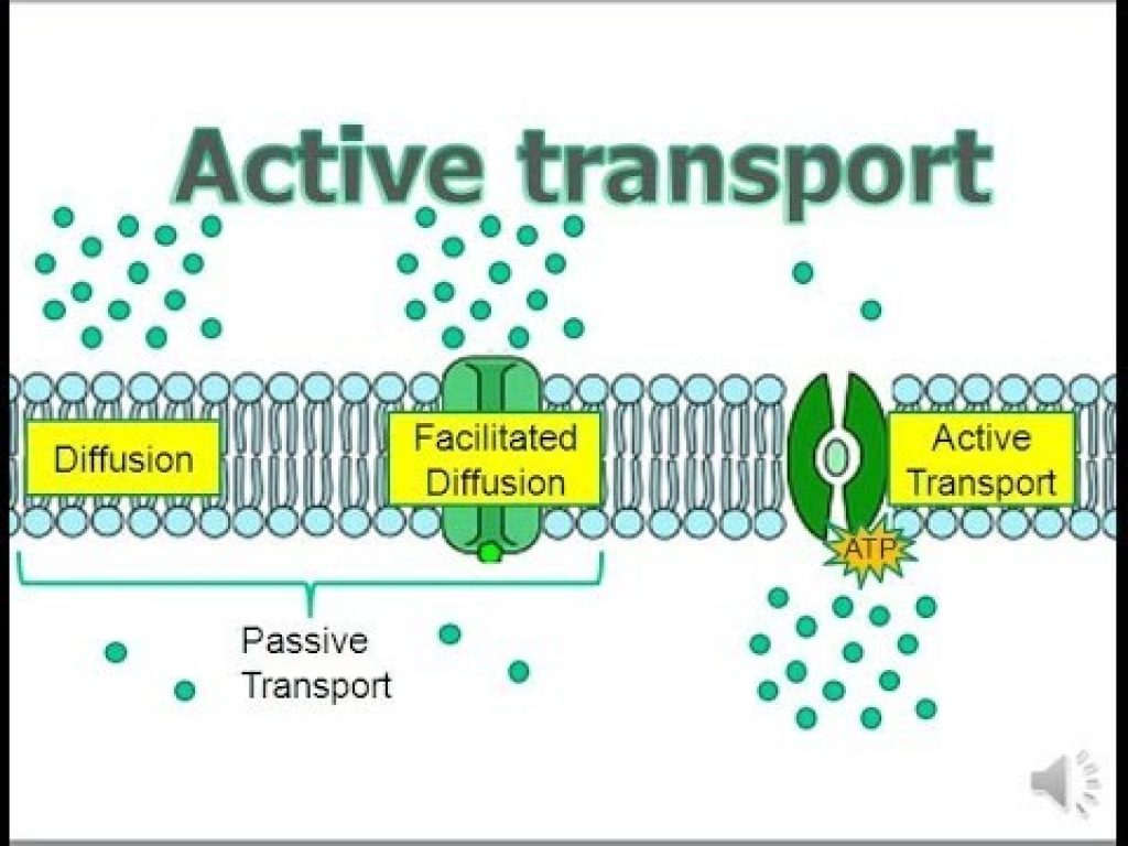 an analysis of exocytosis and endocytosis in active cell transport of cells in the body