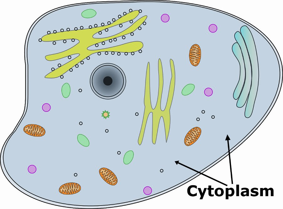 Photo of Some Information about Cytoplasm