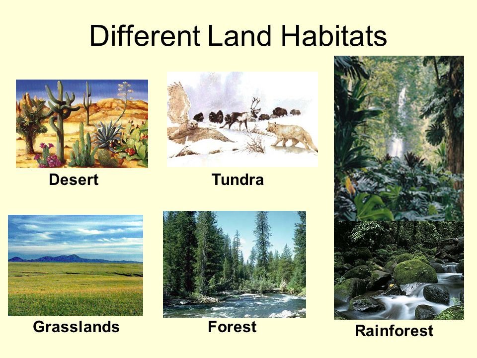 Photo of Some Information About the Various Habitats of Plants